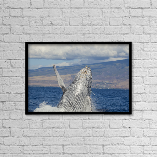 """Printscapes Wall Art: 18"""" x 12"""" Canvas Print With Black Frame - Marine Life by Dave Fleetham"""