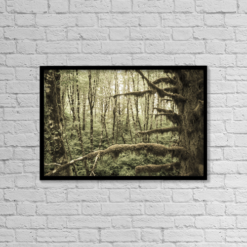 "Printscapes Wall Art: 18"" x 12"" Canvas Print With Black Frame - Mossy Tree Trunks In The Woods by Remsberg Inc"