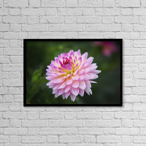 """Printscapes Wall Art: 18"""" x 12"""" Canvas Print With Black Frame - Pink Zinnia Flower by Remsberg Inc"""