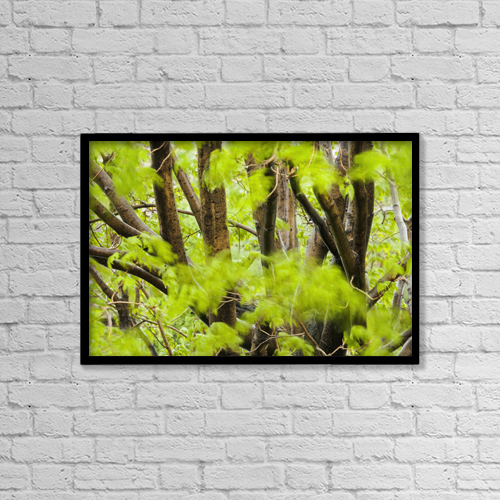 "Printscapes Wall Art: 18"" x 12"" Canvas Print With Black Frame - Leaves Of A Maple Tree Blurred In The Wind by Yves Marcoux"