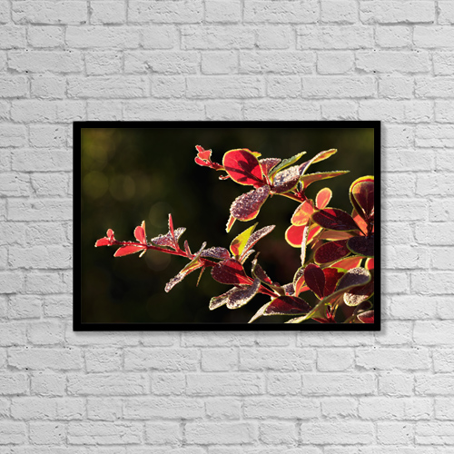 "Printscapes Wall Art: 18"" x 12"" Canvas Print With Black Frame - Close Up Of Berberis; Quebec, Canada by Yves Marcoux"