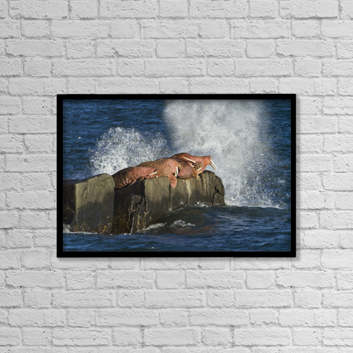"""Printscapes Wall Art: 18"""" x 12"""" Canvas Print With Black Frame - Marine Life by Gary Schultz"""