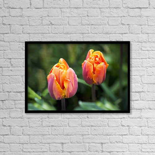"Printscapes Wall Art: 18"" x 12"" Canvas Print With Black Frame - Blossoming Multi-Coloured Tulips by Lorna Rande"