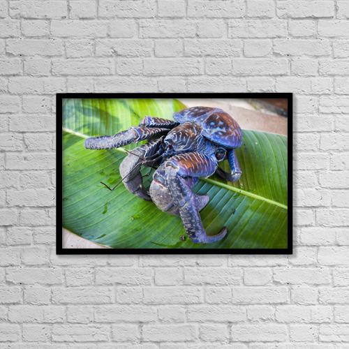 "Printscapes Wall Art: 18"" x 12"" Canvas Print With Black Frame - Coconut Crab (Birgus Latro); Vanuatu by David Kirkland"
