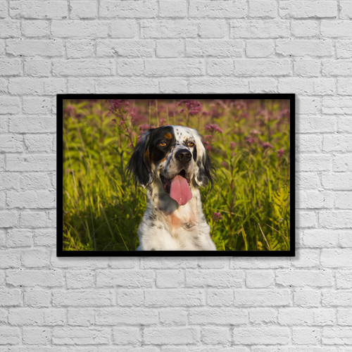 "Printscapes Wall Art: 18"" x 12"" Canvas Print With Black Frame - English Setter In Late Summer Vegetation by Lynn Stone"