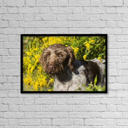 "Printscapes Wall Art: 18"" x 12"" Canvas Print With Black Frame - German Wirehaired Pointer In Autumn by Lynn Stone"