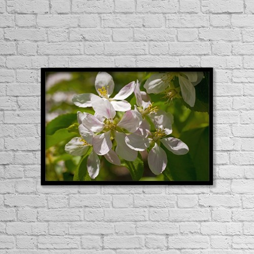 "Printscapes Wall Art: 18"" x 12"" Canvas Print With Black Frame - Apple Blossoms; Ottawa, Ontario, Canada by David Chapman"