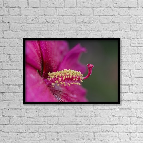 """Printscapes Wall Art: 18"""" x 12"""" Canvas Print With Black Frame - Flowers by F. M. Kearney"""