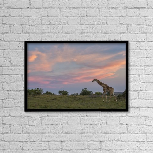 "Printscapes Wall Art: 18"" x 12"" Canvas Print With Black Frame - Giraffe At Sunset; South Africa by Robert Postma"