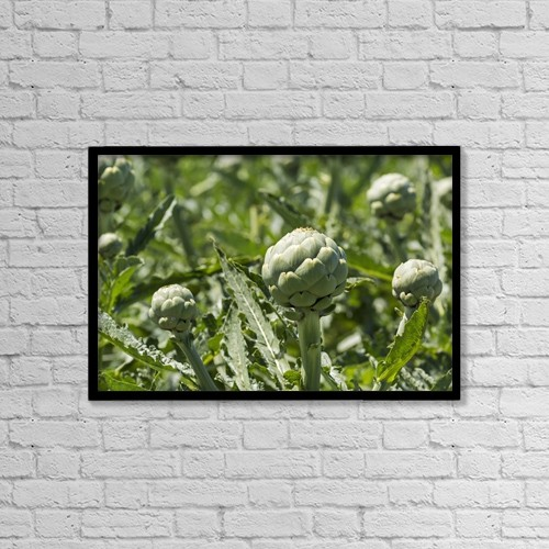 "Printscapes Wall Art: 18"" x 12"" Canvas Print With Black Frame - Close Up Of Artichoke Heads In Field by Michael Interisano"