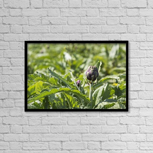"""Printscapes Wall Art: 18"""" x 12"""" Canvas Print With Black Frame - Close Up Of Artichoke Heads In Field by Michael Interisano"""