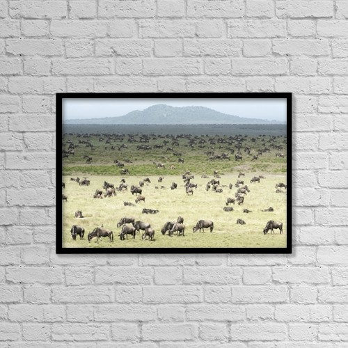 """Printscapes Wall Art: 18"""" x 12"""" Canvas Print With Black Frame - Animals by Kenneth Whitten"""