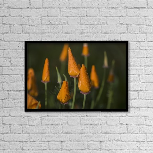 "Printscapes Wall Art: 18"" x 12"" Canvas Print With Black Frame - Flowers by Robert L. Potts"