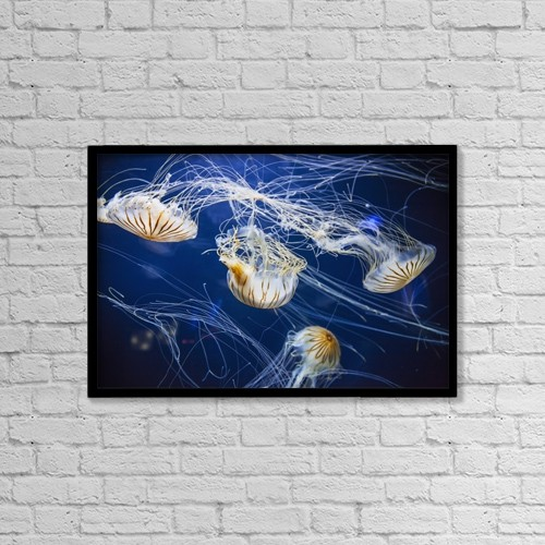 "Printscapes Wall Art: 18"" x 12"" Canvas Print With Black Frame - Jellyfish At The Aquarium Of The Bay by Leah Bignell"