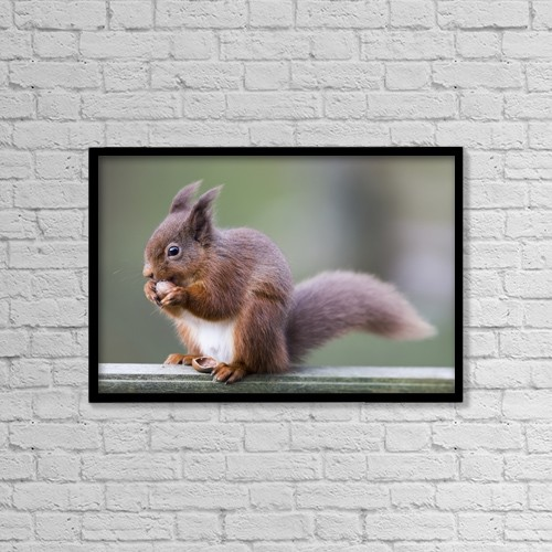 """Printscapes Wall Art: 18"""" x 12"""" Canvas Print With Black Frame - Squirrel Eating An Acorn; Cumbria, England by John Short"""