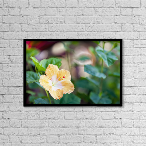 "Printscapes Wall Art: 18"" x 12"" Canvas Print With Black Frame - Hibiscus by Ian Ludwig"