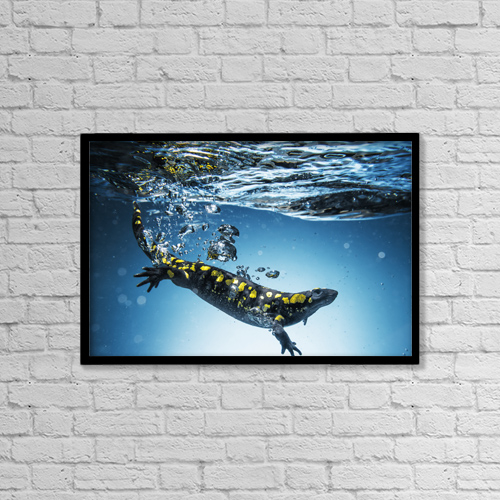 """Printscapes Wall Art: 18"""" x 12"""" Canvas Print With Black Frame - Salamander (Caudata) Swimming In Water by Ben Welsh"""