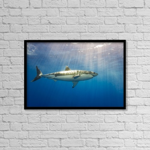 "Printscapes Wall Art: 18"" x 12"" Canvas Print With Black Frame - Great White Shark (Carcharodon Carcharias) by Dave Fleetham"