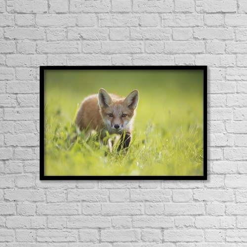 "Printscapes Wall Art: 18"" x 12"" Canvas Print With Black Frame - A Fox In The Grass by Vladislav Kamenski"