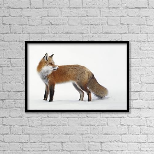 "Printscapes Wall Art: 18"" x 12"" Canvas Print With Black Frame - Fox In The Snow by Vladislav Kamenski"