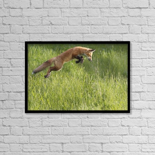 "Printscapes Wall Art: 18"" x 12"" Canvas Print With Black Frame - Fox Jumping In A Grass Field by Vladislav Kamenski"