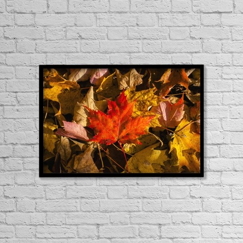 """Printscapes Wall Art: 18"""" x 12"""" Canvas Print With Black Frame - Red Maple Leaf On Leaf Background by David Chapman"""