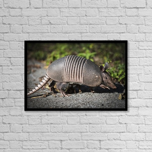 "Printscapes Wall Art: 18"" x 12"" Canvas Print With Black Frame - Armadillo Crosses The Trail by Robert L. Potts"