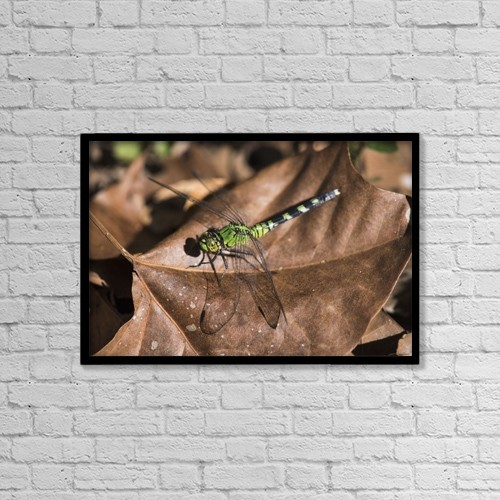 """Printscapes Wall Art: 18"""" x 12"""" Canvas Print With Black Frame - Animals by Robert L. Potts"""