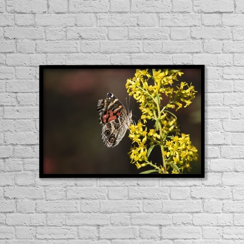 "Printscapes Wall Art: 18"" x 12"" Canvas Print With Black Frame - Animals by Robert L. Potts"